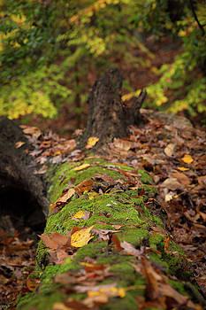 Fallen Oak by Jim Neal