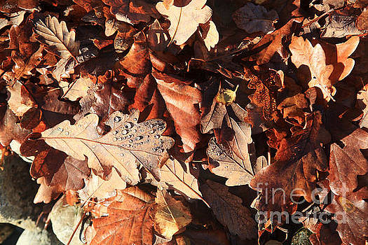 Fallen Oak Leaves by Bryan Attewell