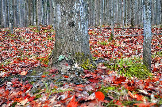 Fallen Red Leaves by Samantha Boehnke