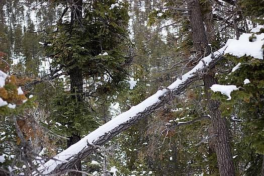 Scott Harris - Fallen Tree