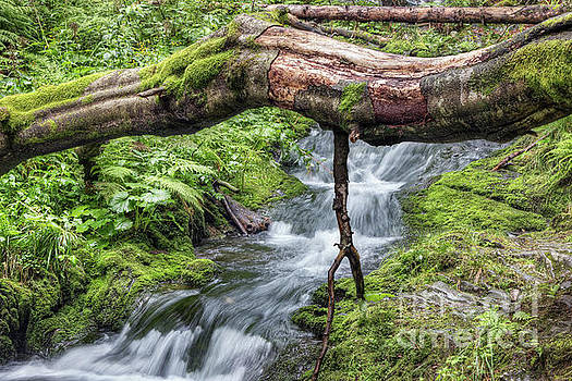 Fallen tree trunk over stream by Michal Boubin