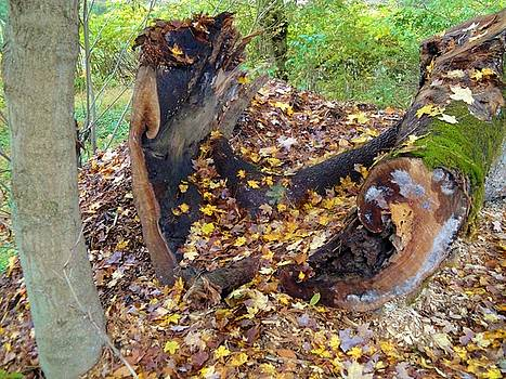 Fallen Tree With Leaves and Moss by Terry  Wiley