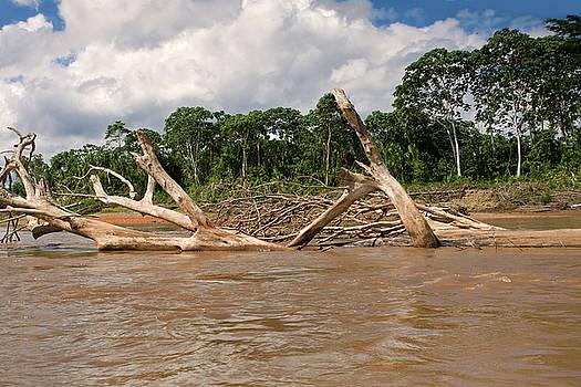 Aivar Mikko - Fallen Trees in Boca Manu river