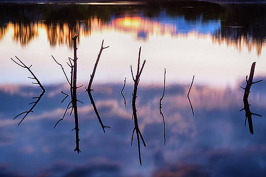 Fallen Twiggy Reflections by James BO Insogna