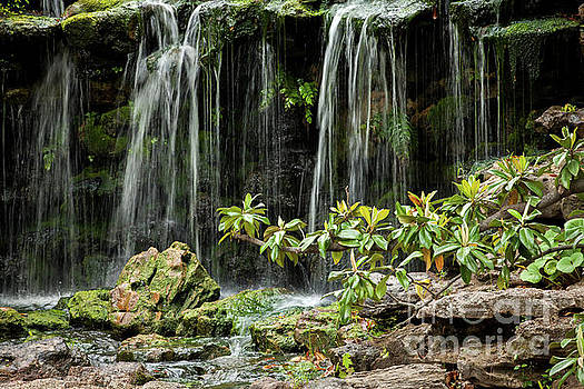 Falling Falls in the Garden by Iris Greenwell
