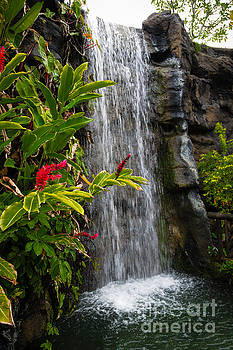 Jon Burch Photography - Falling Water and Red Flowers