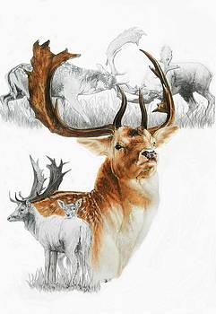 Barbara Keith - Fallow Deer