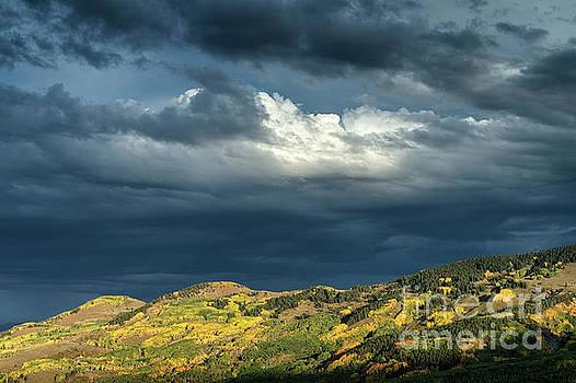Falls Aspen Colors in Colorado by Tibor Vari