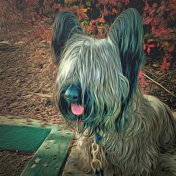 Fall's Skye Terrier by Janice MacLellan