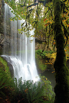 Adam Jewell - Falls Though The Trees