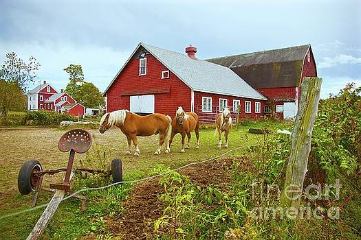 Amazing Jules - Family on the Farm
