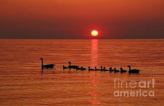Sunset Family Outing by Tony Lee
