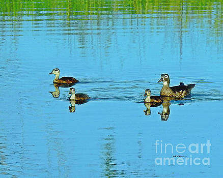 Family Swim On Willow Pond by Kathy M Krause
