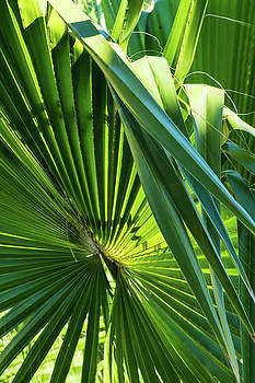 Fan Palm View 3 by James Gay