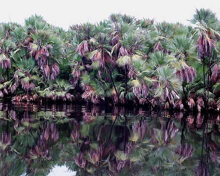 Fan Palms by Steve Madore