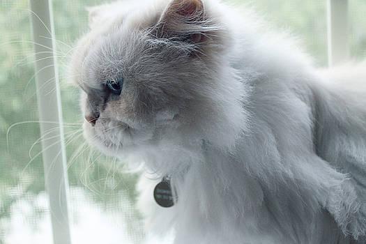 Fancy Fat Cat by Lauren Lancaster