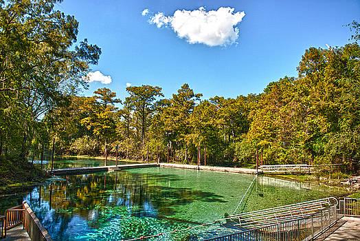 Fanning Springs Swim Platform by Frank Feliciano