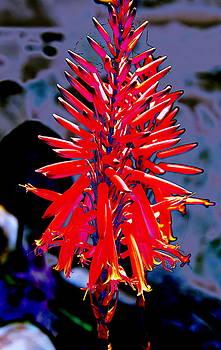 Fantasy Aloe by M Diane Bonaparte
