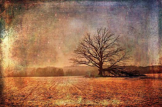 Fantasy Field by Randi Grace Nilsberg