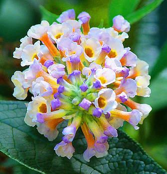 Fantasy Floral Bouquet by Margaret Saheed