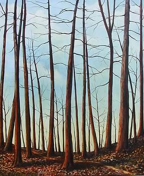 Fantasy Forest by Sharon Steinhaus