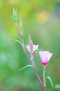 Farewell to Spring by Ram Vasudev