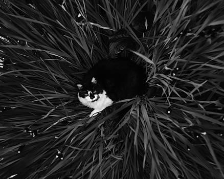 Farm Cat in Siberian Irises by Joseph Duba