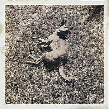 Farm Dog by Sharon Green