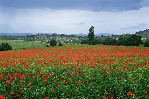 Reimar Gaertner - Farm field of poppies with rain in Assisi Umbria Italy