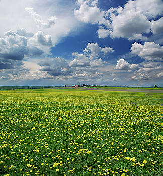 Reimar Gaertner - Farm field with dandelions and dramatic clouds