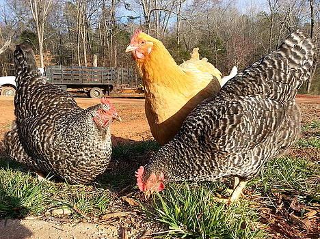 Farm Girls by Brenda Stevens Fanning