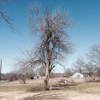 Farm #tree #winter #texas #country by Gin Young