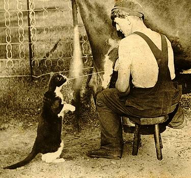 Peter Gumaer Ogden - Farmer Squirting Milk From Cow into Cats Mouth 1900
