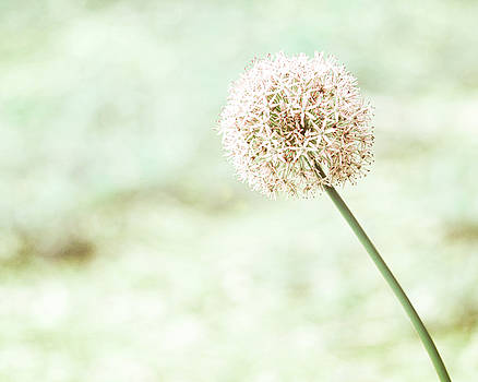Farmhouse Floral Allium by Marcie  Adams
