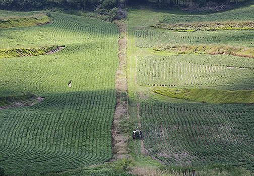 Susan Rissi Tregoning - Farming the Loess