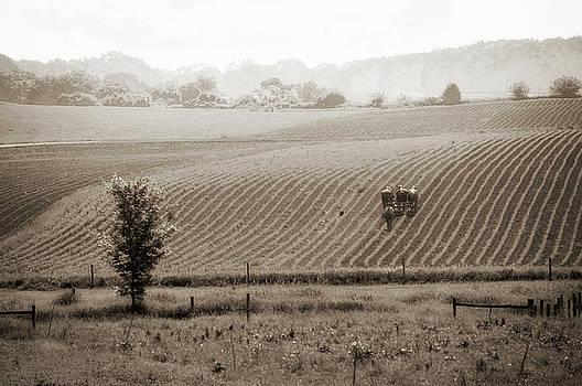 Eleanor Bortnick - Farmland in Lancaster PA