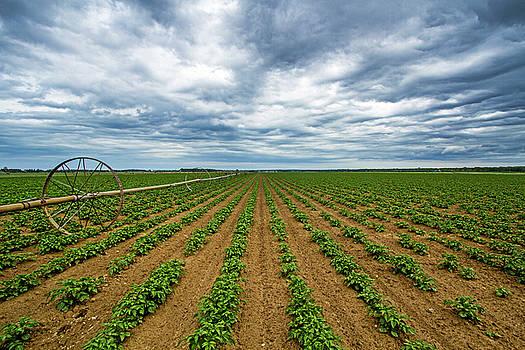 Farmland on the North Fork by Robert Seifert