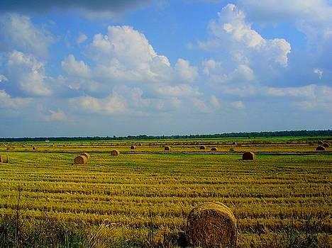 Farmland by Scarlett Chambers