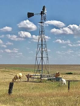 Farmlife memories by Shirley Heier