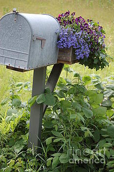 Farm's mailbox by Frank Stallone