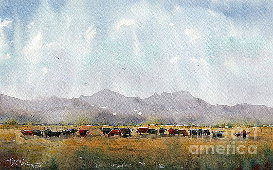 Fat Cows on Rancho Espuela Grass 2 by Tim Oliver