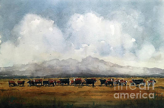 Fat Cows on Rancho Espuela Grass by Tim Oliver