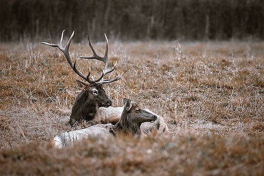 Father and Son by Garett Gabriel