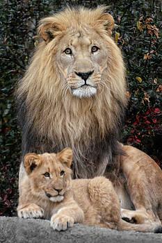 Father And Son by Joachim G Pinkawa