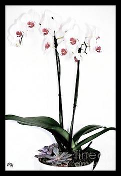 Favorite Gift of Orchids by Marsha Heiken