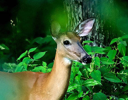 Fawn In Hiding by Pat Carosone