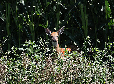 Fawn in the grass by Lori Tordsen