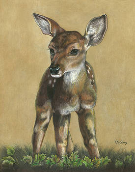 Fawn in the Morning by Carol Gray