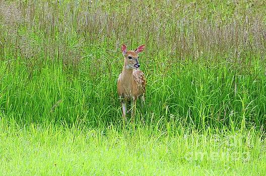 Fawn in the tall grass by Sandra Updyke