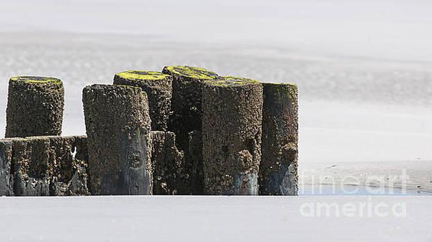 Dale Powell - Folly Beach Erosion